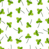 Clover, shamrock wild field flower hand drawn vector sketch  on white backdrop, Vector seamless pattern, graphic. Floral texture background for cosmetics Stock Photos