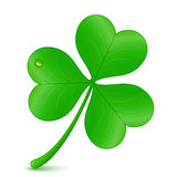 Clover - St. Patrick's day symbol Stock Images