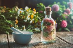 Clover tincture or infusion, mortar, daisy and clover flowers bunch. Stock Photos