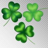 Clover on a transparent background Royalty Free Stock Image