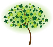 Clover Tree Stock Photo