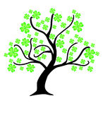 Clover tree Stock Photos