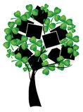 Clover tree Stock Images