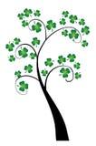 Shamrock tree Stock Image