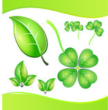 Clover and tree leafs Royalty Free Stock Images