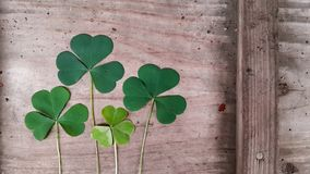 Clover, trefoil, shamrock green leaves on old wooden surface. Irish day saint patricks royalty free stock photo