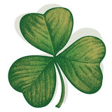 Clover trifoliate Stock Photo