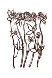 Clover Trifolium Fabaceae Faboideae. Flowers set Botany. Vector illustration Stock Photos