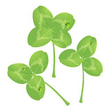 Clover. Vector. Stock Photos
