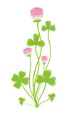 Clover. Vector-Illustration. Royalty Free Stock Photography