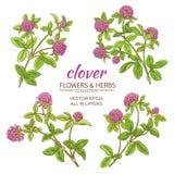Clover vector set Stock Image