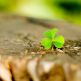 Clover on a wood Royalty Free Stock Images