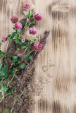 Clover on the wooden background Stock Images
