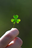 A clover for you Royalty Free Stock Image