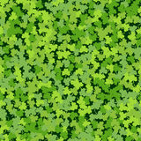 Cloverleaf Green Seamless. Cloverleaf Shamrock Green Seamless Saint Patricks Day Pattern Background. Pattern Texture for Wallpapers, Fills, Web Page, Surface Stock Photos