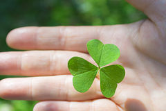 Cloverleaf holding in hand. Green cloverleaf holding in the right hand Royalty Free Stock Photo