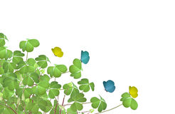 Clovers Royalty Free Stock Photography