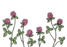 Clovers. Flowers for composition, frame and other stock illustration