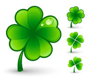 Clovers leaf. Isolated on white vector illustration