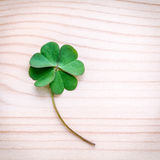 Clovers leaves on Stone .The symbolic of Four Leaf Clover the fi. Rst is for faith, the second is for hope, the third is for love, and the fourth is for luck Stock Photo