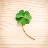 Clovers leaves on Stone .The symbolic of Four Leaf Clover the fi Stock Photo