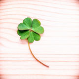 Clovers leaves on Stone .The symbolic of Four Leaf Clover the fi Royalty Free Stock Photo
