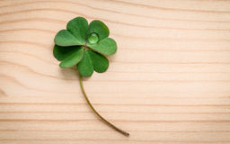 Clovers leaves on wooden background.The symbolic of Four Leaf Cl Royalty Free Stock Image