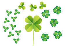 CLOVERS - lucky shamrock. Vectorial illustration that shows 3 kind of clovers from tiny 3 leafs one to the central 4 leafs (lucky shamrock) one Stock Image