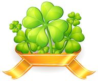 Clovers with ribbon Stock Photo