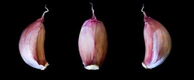 Cloves чеснока Стоковое фото RF
