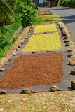 Cloves drying on the sun near the road on Bali Royalty Free Stock Photo