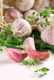 Cloves of garlic royalty free stock images