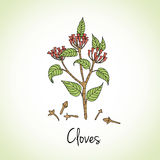Cloves Herbs and Spices. Stock Photo