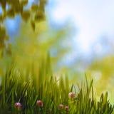 Clower和草,抽象夏天背景 免版税图库摄影