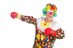 Clown with boxing gloves Royalty Free Stock Photo