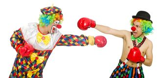 Clown with boxing gloves isolated on the white Royalty Free Stock Images