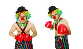 The clown with boxing gloves isolated on the white. Clown with boxing gloves isolated on the white royalty free stock image