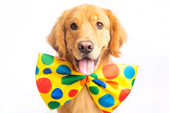 Clown de chien Images stock