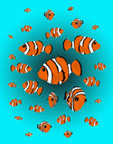Clown-Fische Stockfotografie