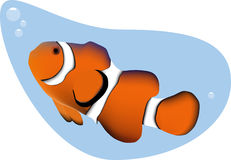 Clown Fish vector illustration