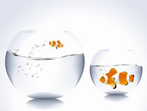 Clown fish. Big clown fish into small bowl and small clown fish into big bowl Stock Photo