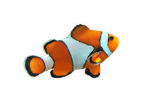 Clown fish. Isolated in white background (Amphiprion percula