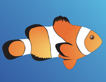Clown Fish Royalty Free Stock Images