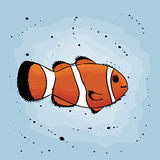 Clown Fish Photos libres de droits