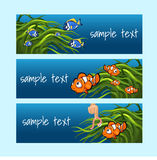 Clown fish among the algae on a blue background. Style card with space for text for games, websites, brochures and any other design needs Stock Photo