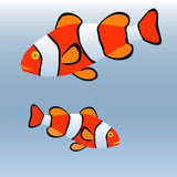 Clown fish or anemone fish Stock Images