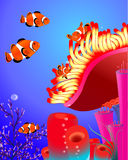 Clown fish with corals. Illustration Stock Photography