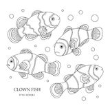 Clown fish. Elements of a clown fish made in the style of doodle. Vector illustration Stock Images