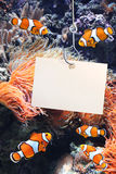 Clown fish and empty sheet of a paper on a fishing hook Stock Photo