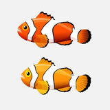 Clown fish icon in flat style on a white background. Anemone fish isolated on white. Clownfish or anemonefish are fishes whose habitat usually is a coral reefs Royalty Free Stock Photography